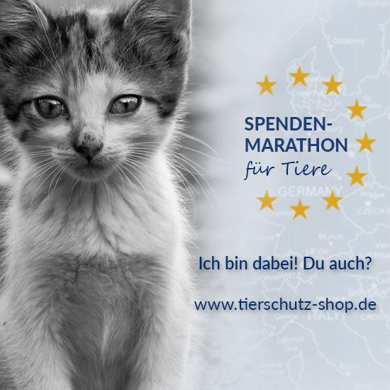 Spendenmarathon_für_Tiere_Facebook_Profilbild_Katze_2017