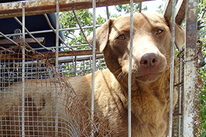 Tierhilfe-Hoffnung-Welt-Tierschutz-Aktion