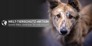 Tierschutz_Shop_Spendenplattform_Welttierschutztag_2017_Facebook_Share