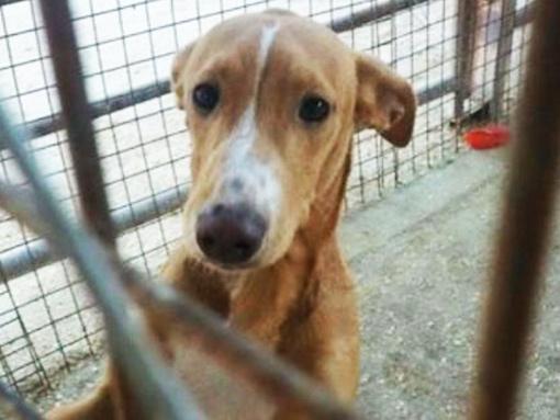 Welt-Tierschutz-Aktion-Spenden-Aktion