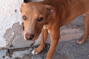 pro-Hund-andaluz-Welt-Tierschutz-Aktion