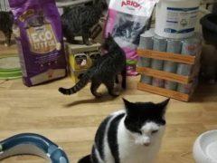 Spendenankunft Katzenhilfe Gelderland 4