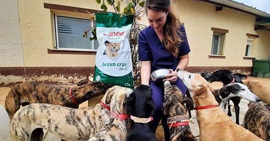 Frau füttert Galgo-Hunde mit Futter aus Spendenaktion