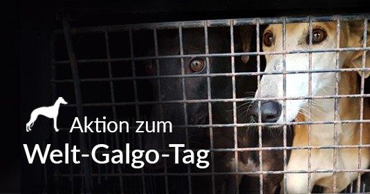 Pressemitteilung Aktion zum Welt-Galgo-Tag 2018 Tierschutz-Shop