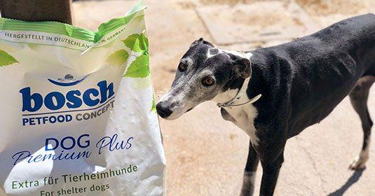 Pressemitteilung-Aktion-zum-Welt-Galgo-Tag-2019-Spenden-kommen-an-Tierschutz-Shop
