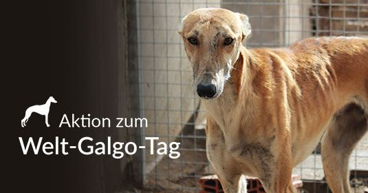 Pressemitteilung Aktion zum Welt-Galgo-Tag 2019 Tierschutz-Shop