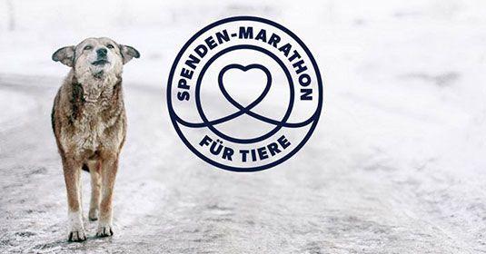 Pressemitteilung-Spenden-Marathon-für-Tiere-4.12.