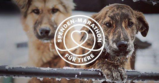 Pressemitteilung-Spenden-Marathon-für-Tiere-7.11.