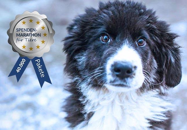 Spendenmarathon2018-Hund_Siegel
