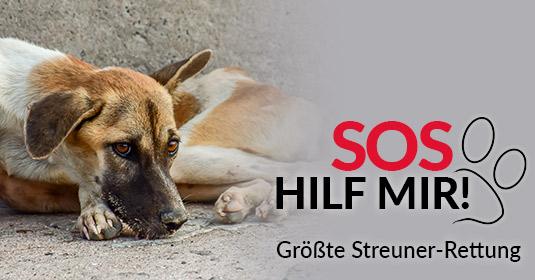 Tierschutz-Shop-Groesste-Streuner-Rettung