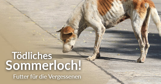 Tierschutz-Shop_toedliches_Sommerloch_2019_535x280