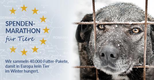Tierschutz_Shop_Spendenplattform_Spendenmarathon_für_Tiere_2018