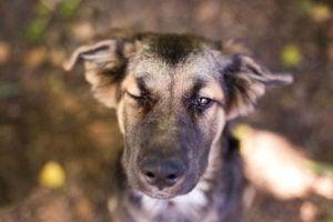 Hundepfoten_Saarpfalz_6