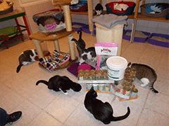 Spendenankunft Katzenhilfe-Hoyerswerda-2