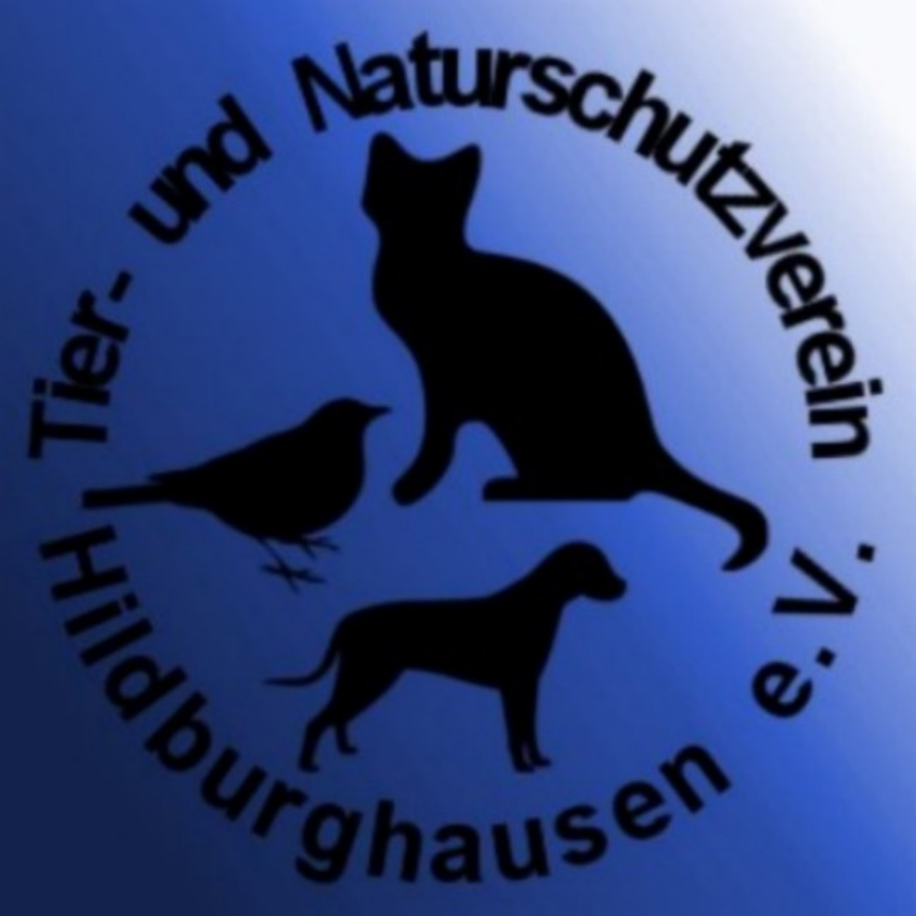 Logo-TSV-Hildburghausen.jpg