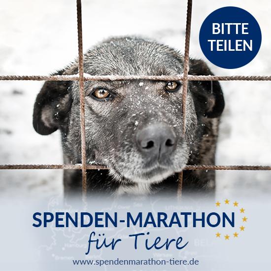 Spenden_Facebook_Post_Spenden-Marathon_2018_Hund