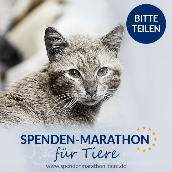 Spenden_Facebook_Post_Spenden-Marathon_2018_Katze