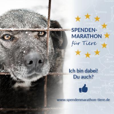 Spenden_Facebook_Profilbild_Spenden-Marathon_2018_Hund