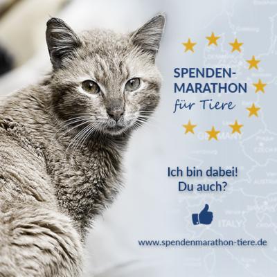 Spenden_Facebook_Profilbild_Spenden-Marathon_2018_Katze