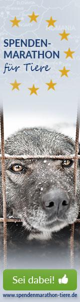 Spenden_Spenden-Marathon_2018_Hund_160x600