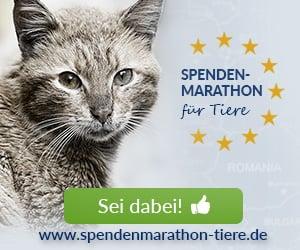 Spenden_Spenden-Marathon_2018_Katze_300x250