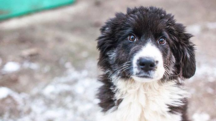 Wir starten den ersten Spenden-Marathon für heimatlose Straßen- und Tierheimtiere in der EU.