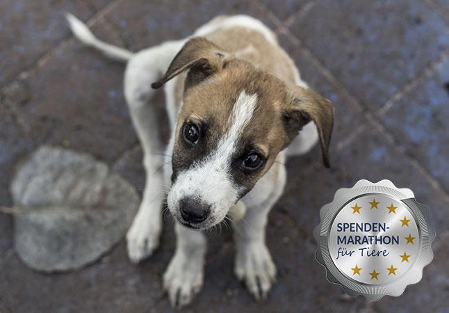 spenden-marathon-2018-hund-1-Siegel