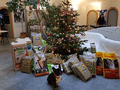 Spendenankunft Tierheim-Pfullingen-1