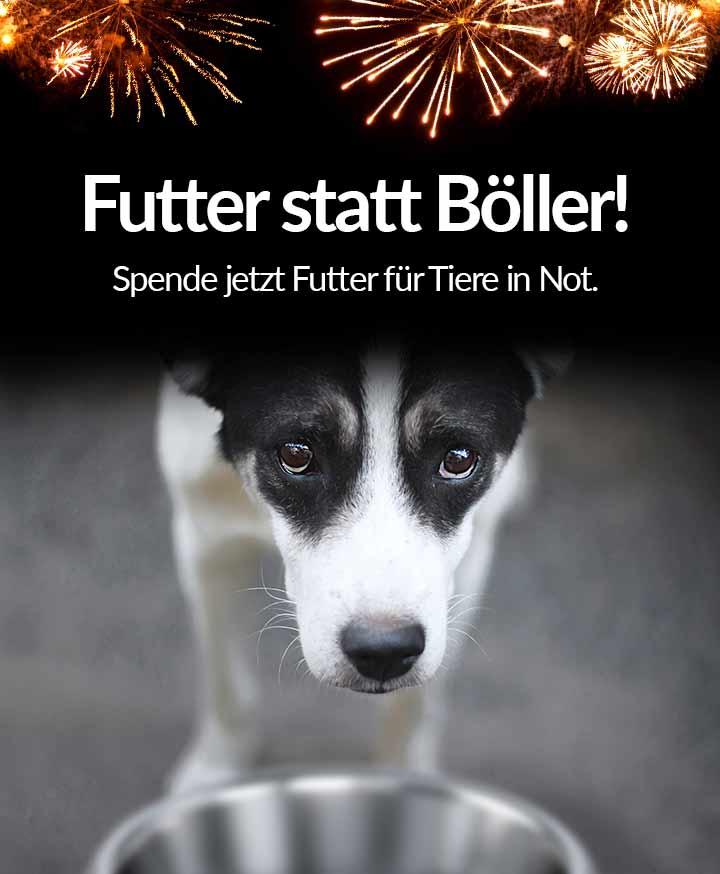 Tierschutz-Shop_Spendenplattform_Futter_statt_Boeller_Aktion_2018_Header_Mobil_Spendenaktionsseite_720x874px