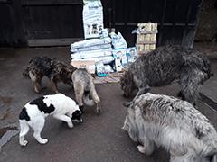 Spendenankunft Tierschutzhunde-Russland-1