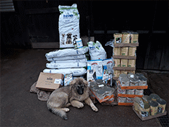Spendenankunft Tierschutzhunde-Russland-2