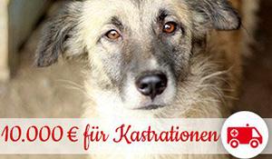 10.000 Euro für Kastrationen von Sponsor bosch