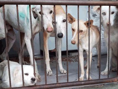 Tierschutz-Shop-Aktion-zum-Welt-Galgo-Tag-Galgos