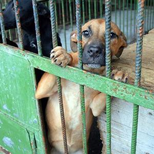 Tierschutz_Shop_Spendenplattform_THdM_Tierhilfe_Hands4Paws_Januar_2018_Wunschliste-1.png