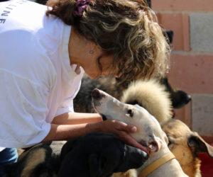 Tierschutz-Shop Aktion zum Welt-Galgo-Tag