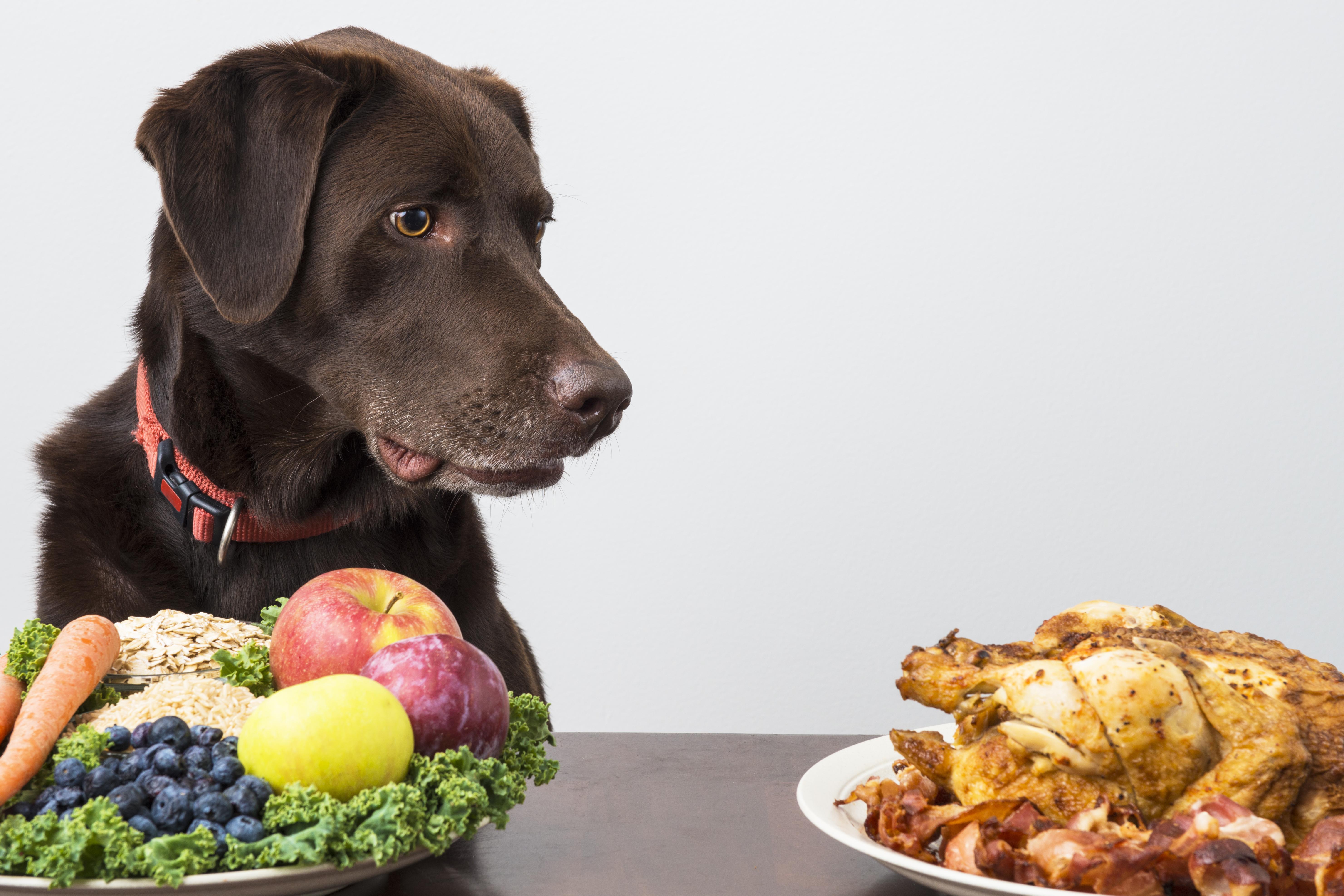 Vegetarische Ernährung Hund