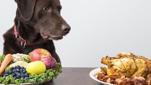 Ist das gesund: Einen Hund vegetarisch füttern?