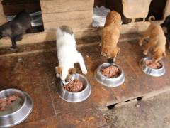 Freundeskreis-der-Straßenhunde-Campulung-3-neu