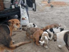 Spendenankunft Tiere-in-Not-Griechenland-3
