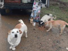Spendenankunft Tiere-in-Not-Griechenland-4