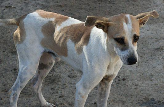 Tierschutz-Shop-Tödliches-Sommerloch-Futter-für-die-Vergessenen
