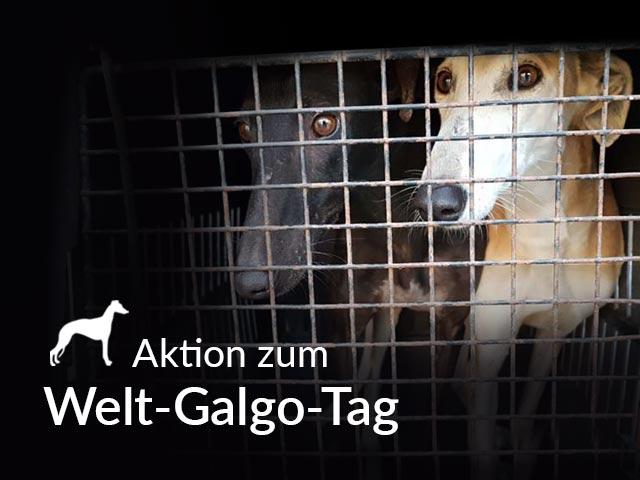 Tierschutz-Shop-Welt-Galgo-Tag-Aktion-Landingpage_640x480