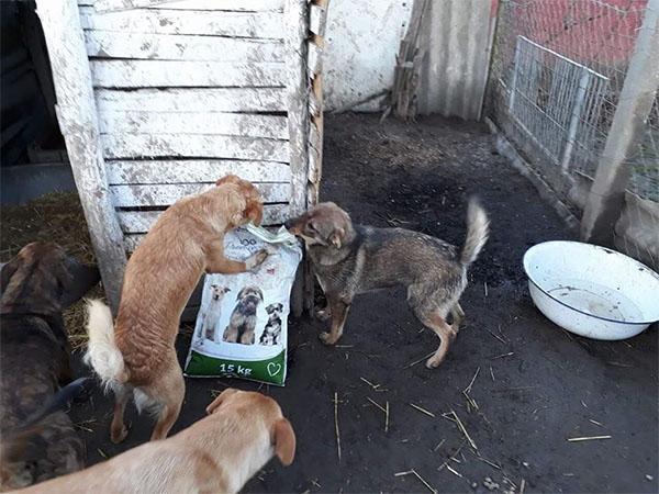 Die Fellnasen freuen sich über die Futterspenden