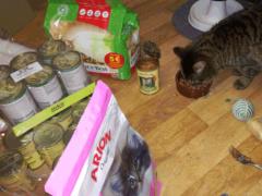 Spendenankunft Katzenhilfe-Gelderland-3