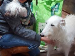 Spendenankunft Pro Animale für Tiere in Not neu