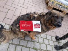 Spendenankunft Schutzhunde Russland 1