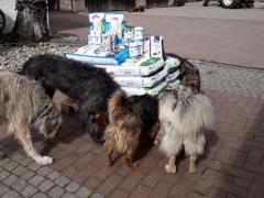 Spendenankunft Schutzhunde Russland 3