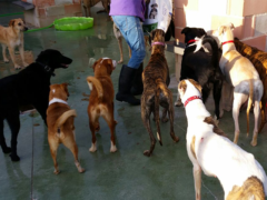 TSV Galgo Friends 3