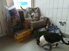 Spendenankunft Tierheim-Feucht-2
