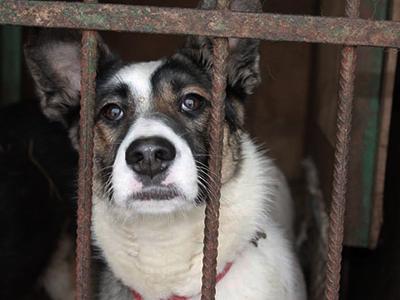 Tierschutz-Shop-Notstand-in-Russland-Tierschutzhunde-Streuner-1